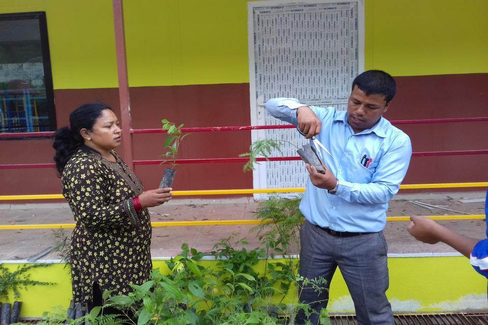Tree Plantation 2
