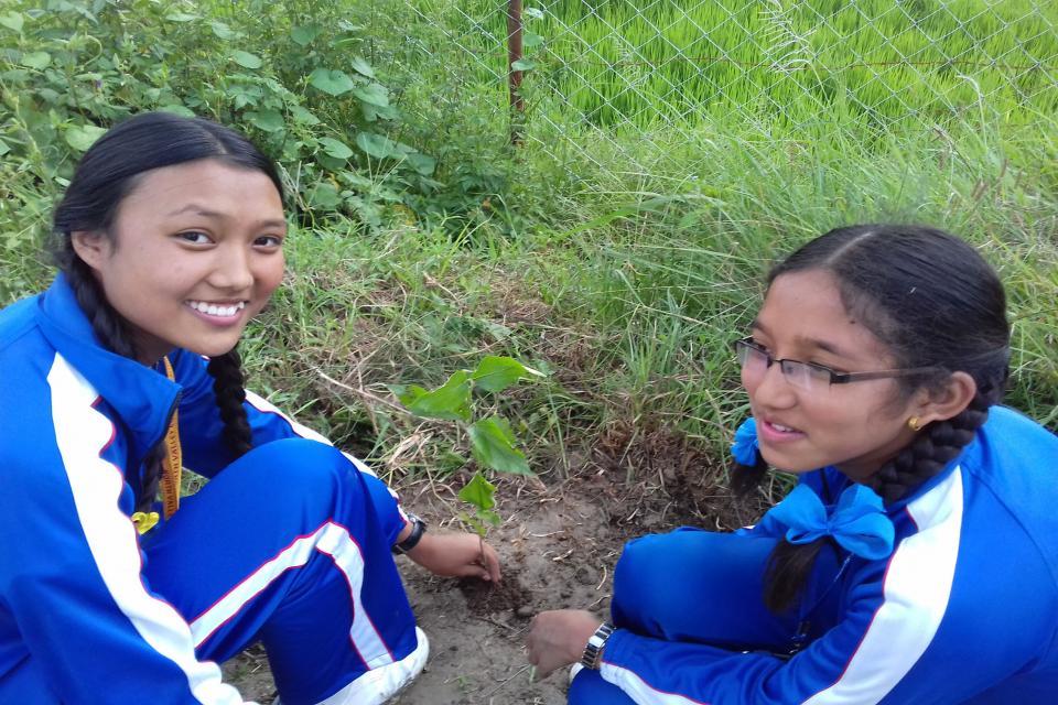 Tree Plantation  4