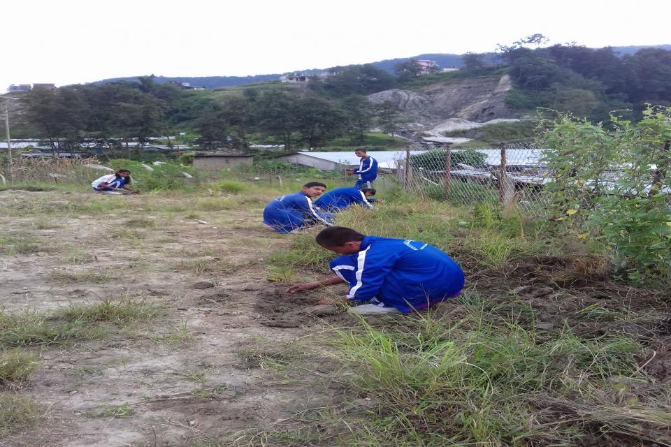 Tree Plantation  10