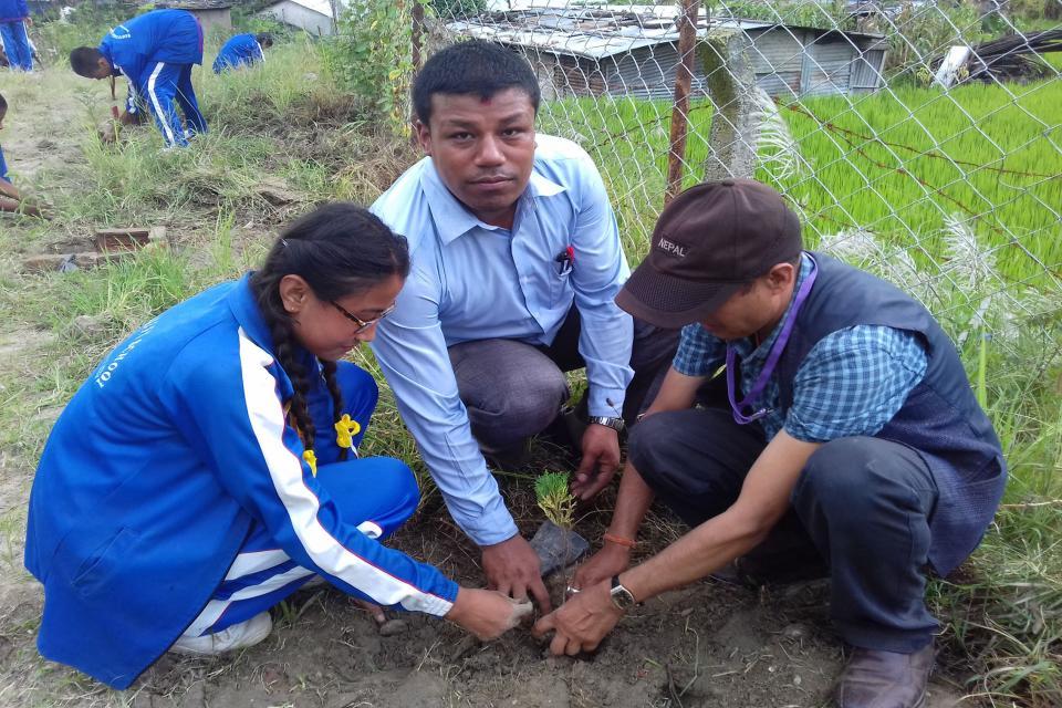 Tree Plantation  12
