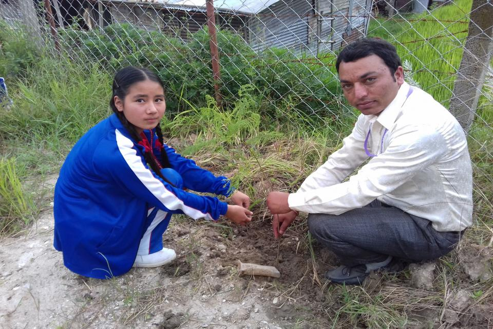 Tree Plantation  14