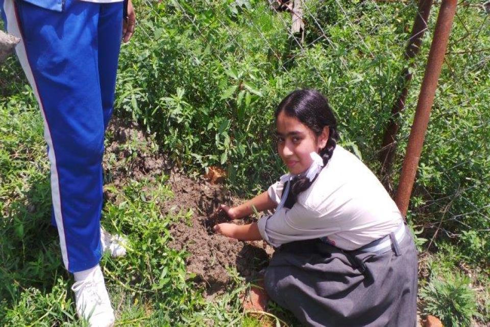 Plantation on World Environment Day -2075